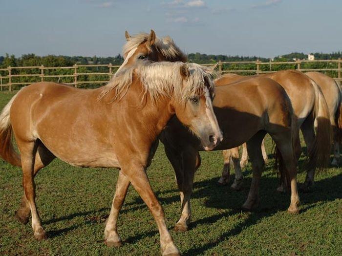 Agriturismo Corte Morandini -The Equestrian Club: one of the great passions of Corte Morandini